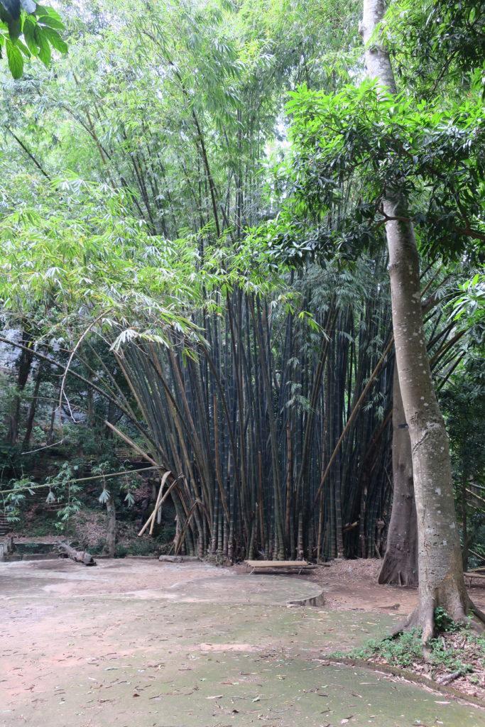 Séjours tourisme en Guinée Conakry avec les Caorès